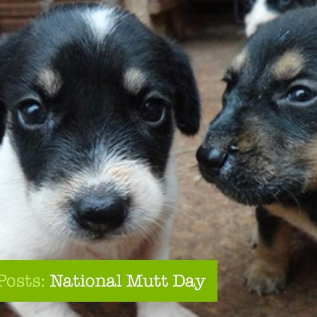 National Day Posts: National Mutt Day